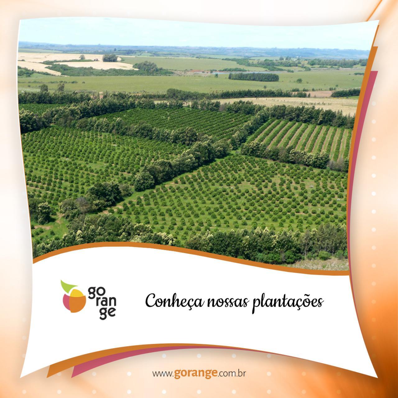 Conheça nossas plantações