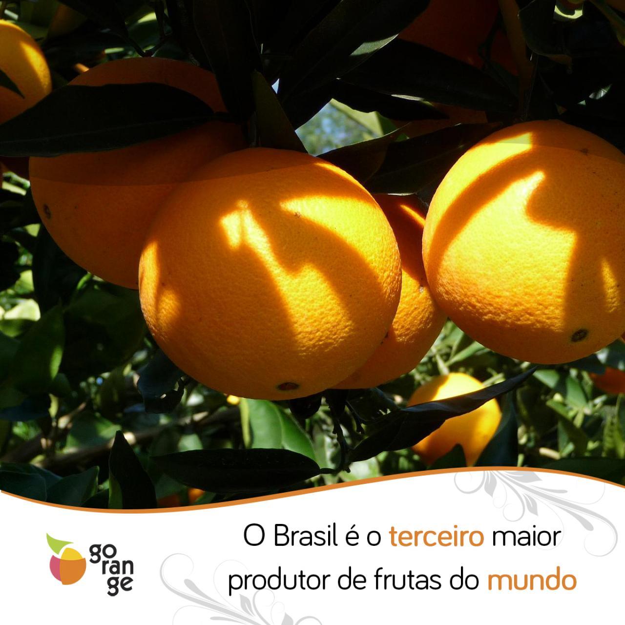 Brasil é o terceiro maior produtor de frutas do mundo