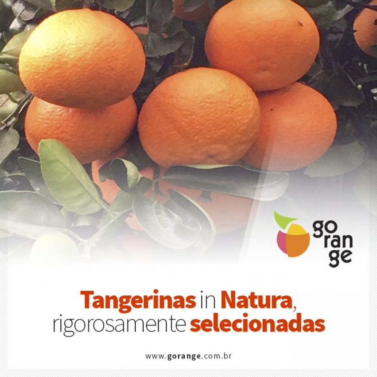 Tangerinas in Natura