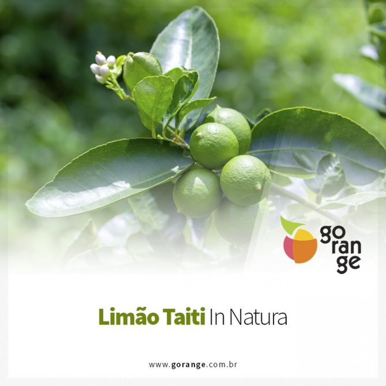 Limão Taiti in Natura