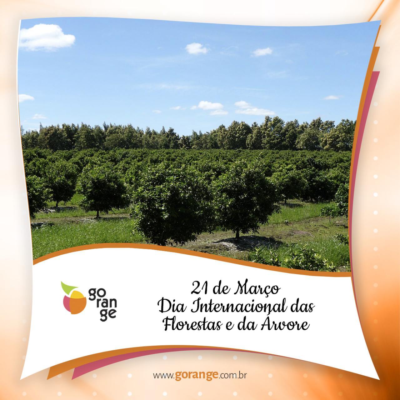21 de Março - Dia Internacional das Florestas e da Árvore