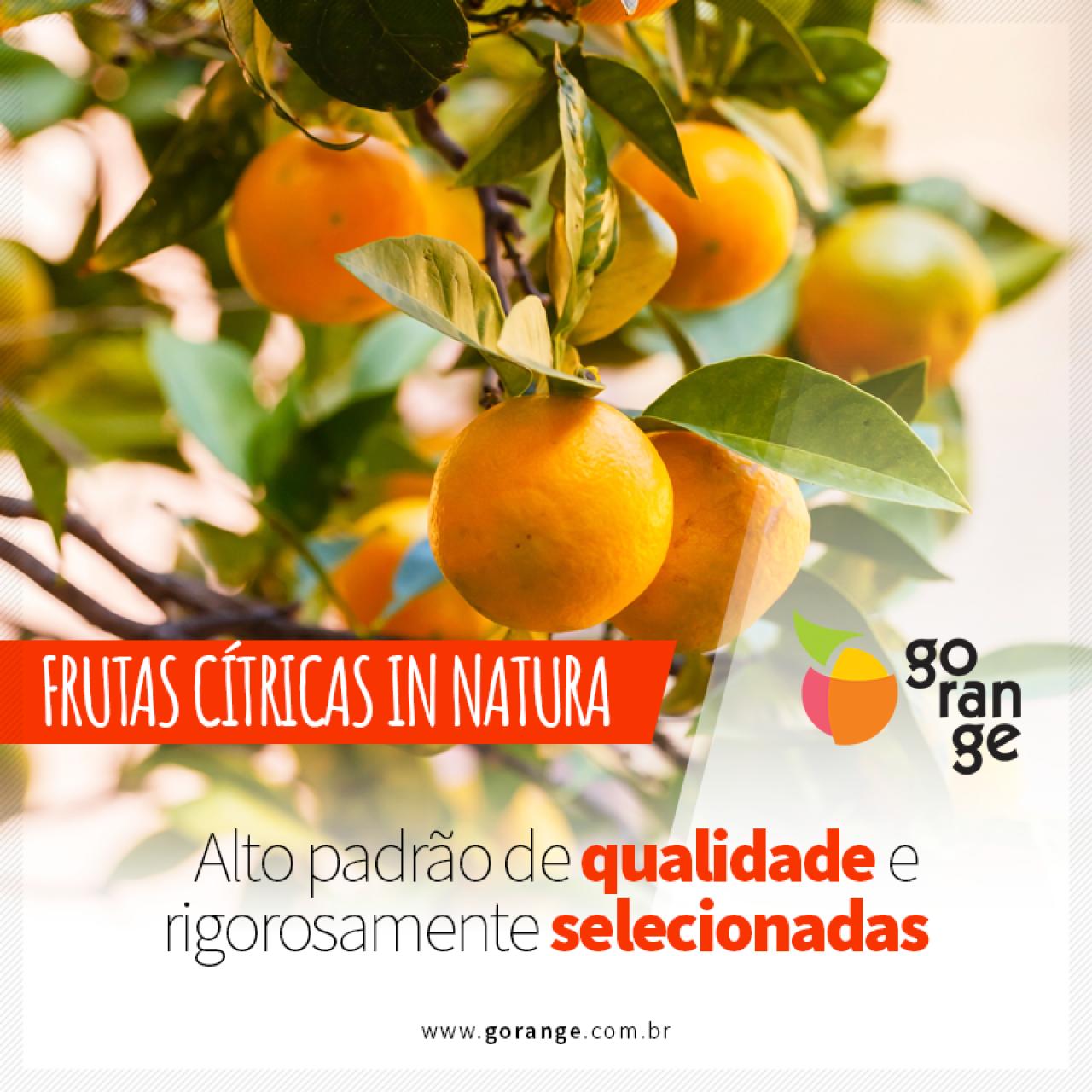 Frutas Cítricas in Natura de alto padrão e Qualidade