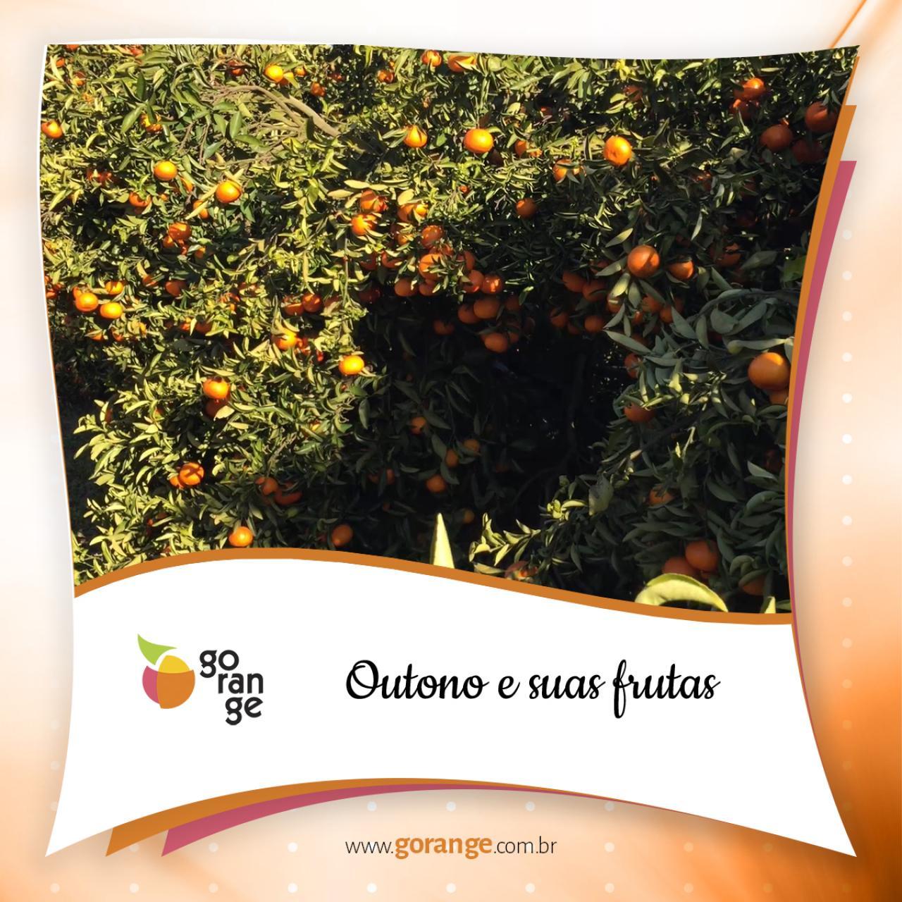 Outono e suas frutas