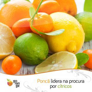 Citrus: Poncã lidera na procura por cítricos