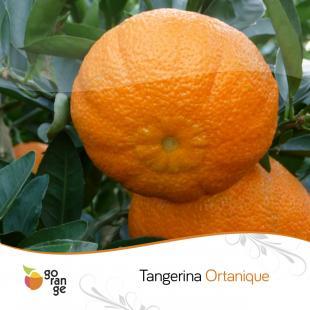 Tangerina Ortanique